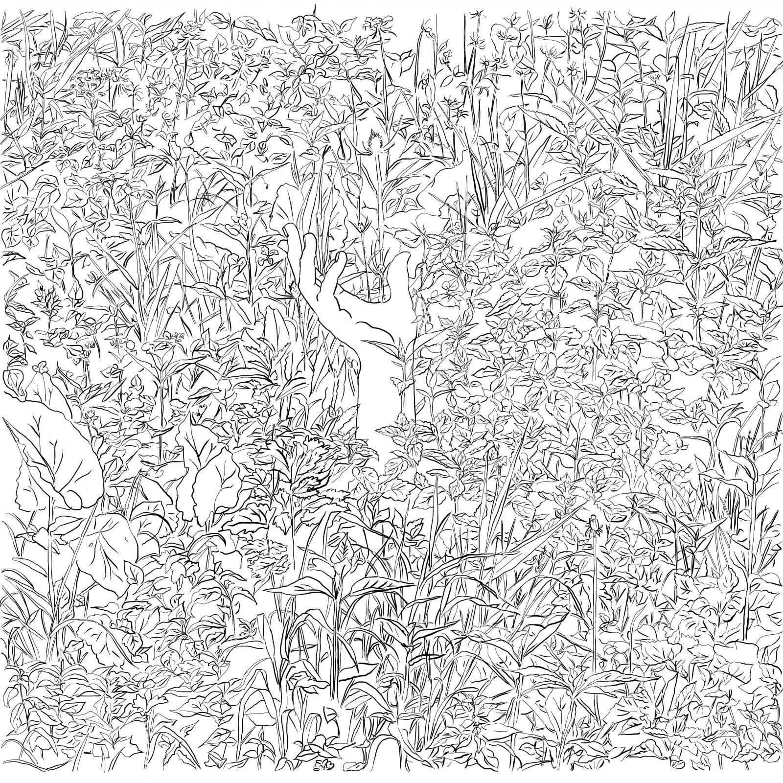 SuperSam+1, 2016 - rysunek